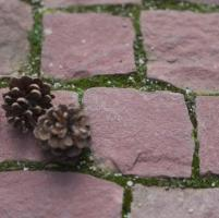 Piatra Cubica Sandstone Rosu Vidin Natur